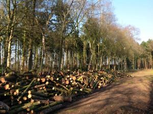 Bomen snoeien en vellen