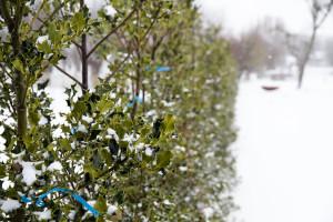 onderhoud van je tuin in de winter